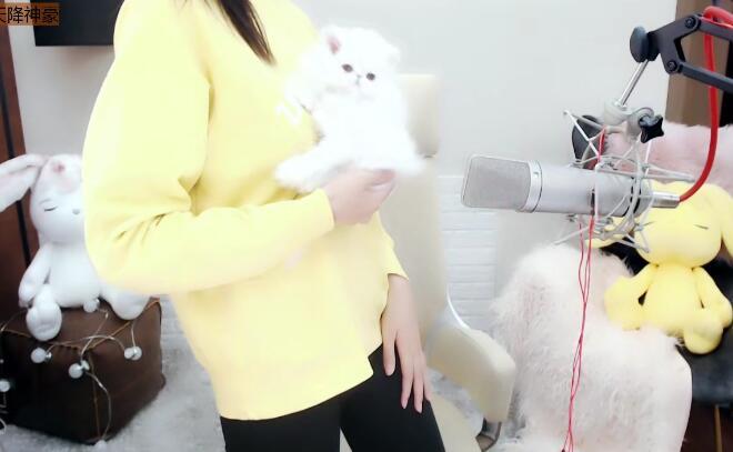 """吸金女王芮甜甜""""炫富"""",花费数十万养猫,这是养的另一个自己"""